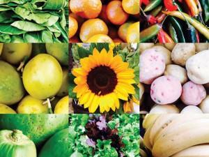 Yamba Farmers Markets